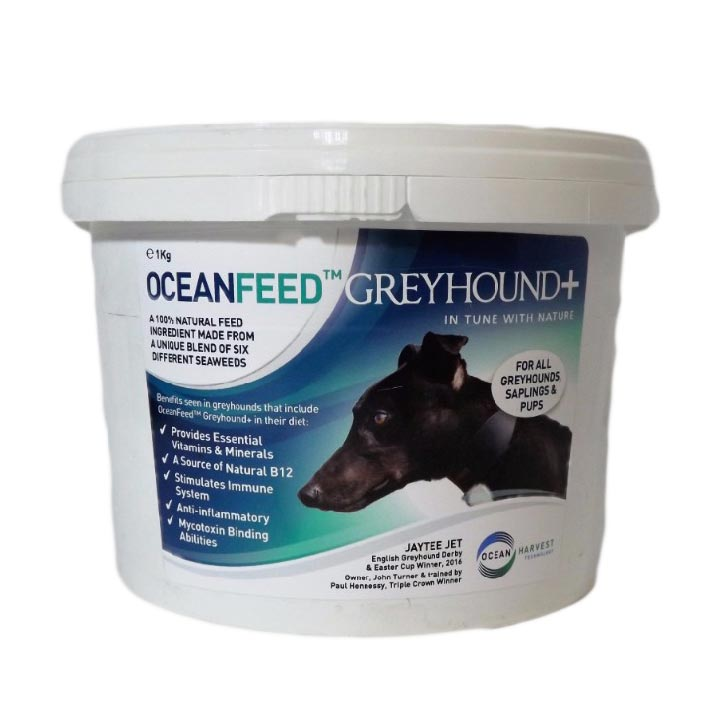 OCEAN FEED GREYHOUND+